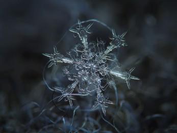 Snow Flake photograph by Alexey Kljatov